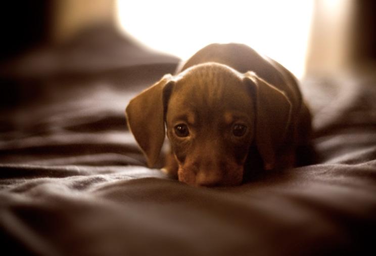 que-hacer-la-primera-noche-de-mi-cachorro-en-casa-3