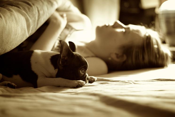 que-hacer-la-primera-noche-de-mi-cachorro-en-casa-4