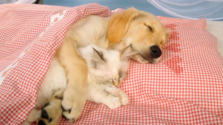 Síndrome de Cushing: la enfermedad que compartimos con perros y gatos