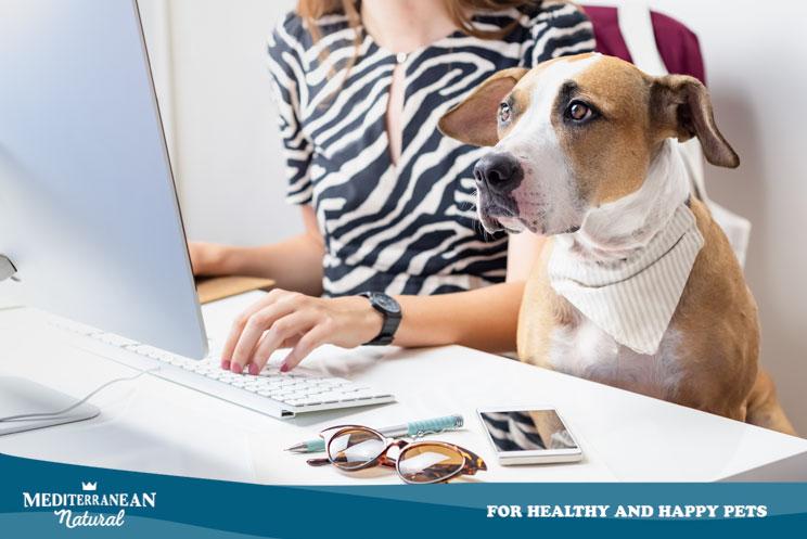 10 blogs sobre perros que debes seguir