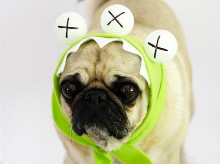 10-ideas-de-disfraces-para-perros-con-tutorial-10