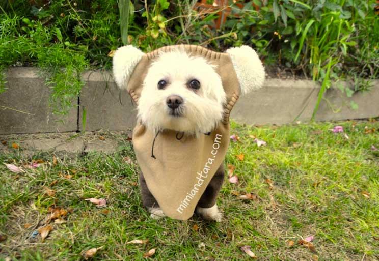 10-ideas-de-disfraces-para-perros-con-tutorial-4