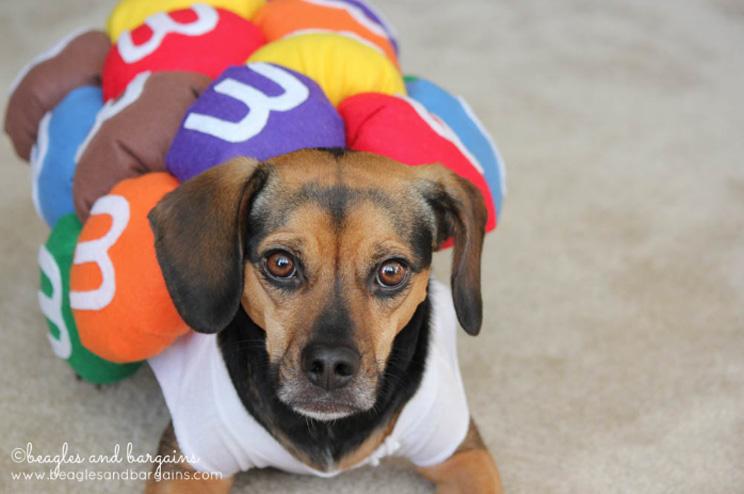 10 ideas de disfraces para perros con tutorial