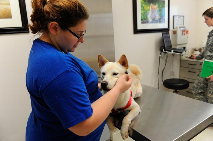 Síntomas del resfriado en perros: tos de las perreras