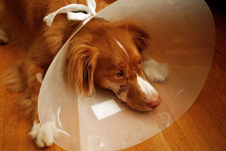 Qué debe contener el botiquín de mi perro