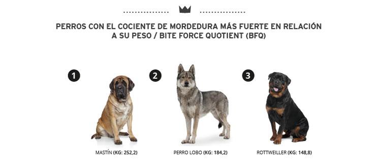 Resistencia de los huesos de jamón a la fuerza de mordida de los perros: minimizamos el astillamiento