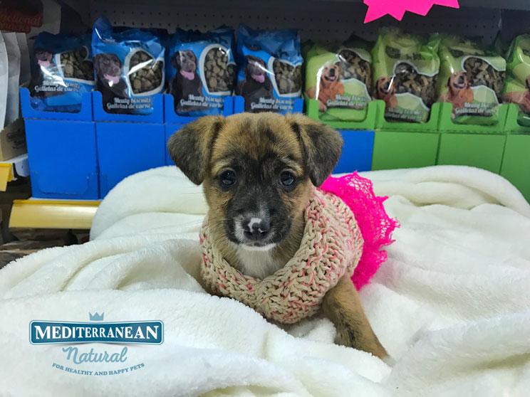 Perros en adopción: Princesa busca castillo antes de Navidad