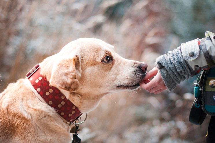 Cómo colaborar si no puedo adoptar un perro