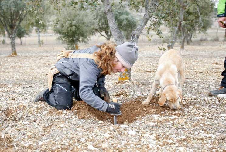Cómo adiestrar a un perro para buscar trufas