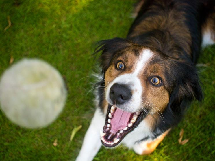 como-adiestrar-a-un-perro-para-buscar-trufas-3