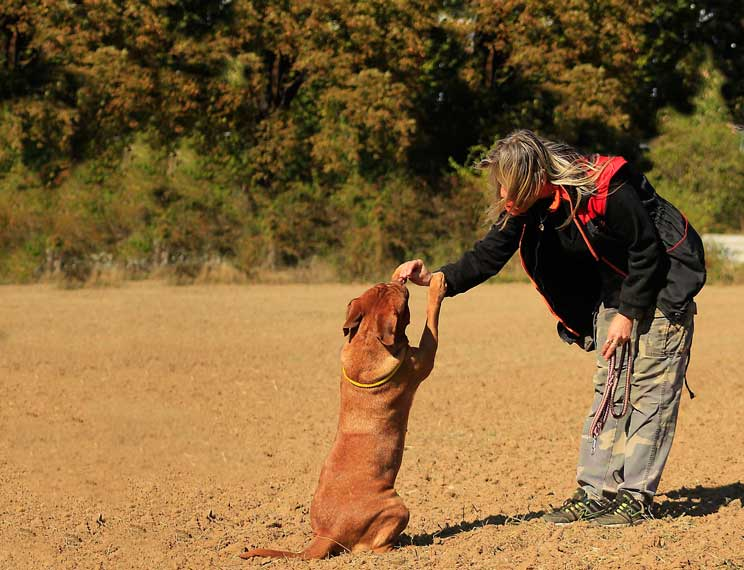 como-adiestrar-a-un-perro-para-buscar-trufas-8