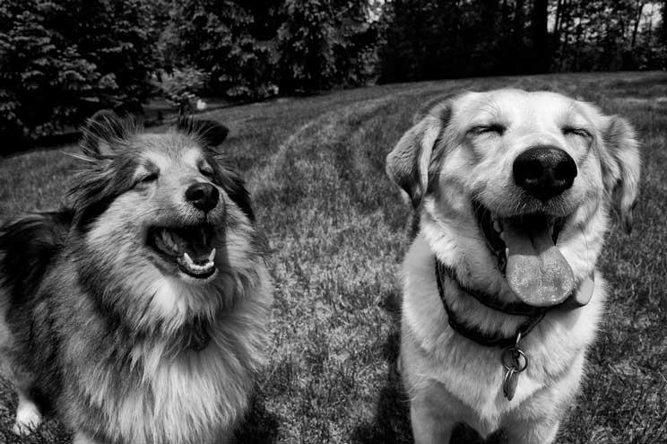 15 consejos para hacer una buena foto a un perro