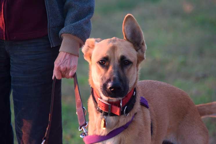 Aprobada proposición no de ley: las mascotas no son cosas