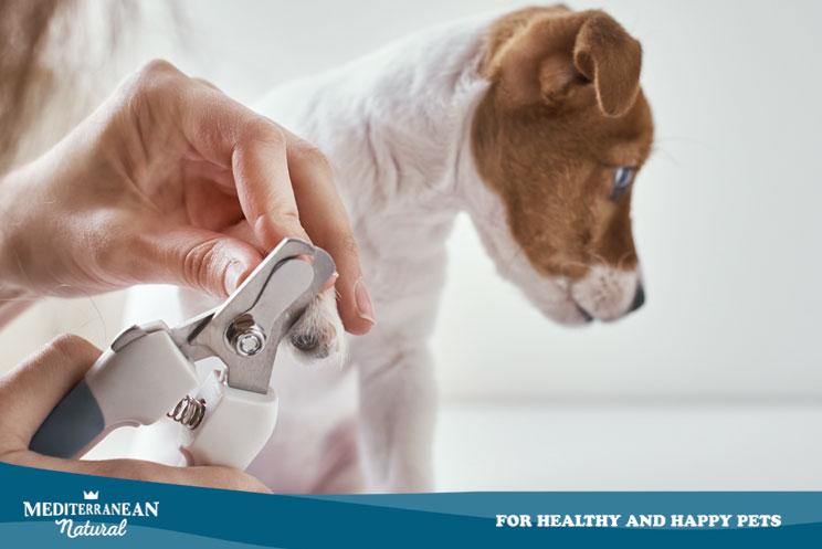 ¿Cómo cortar las uñas a mi perro?