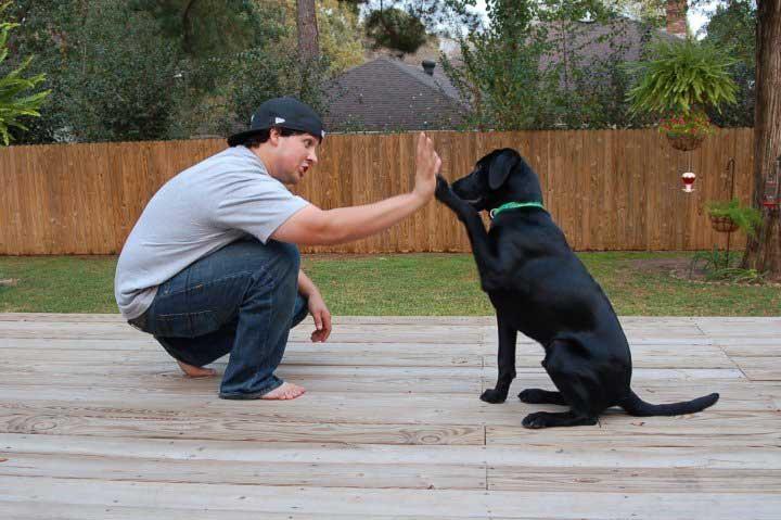 Cómo empezar a enseñar trucos fáciles a mi perro