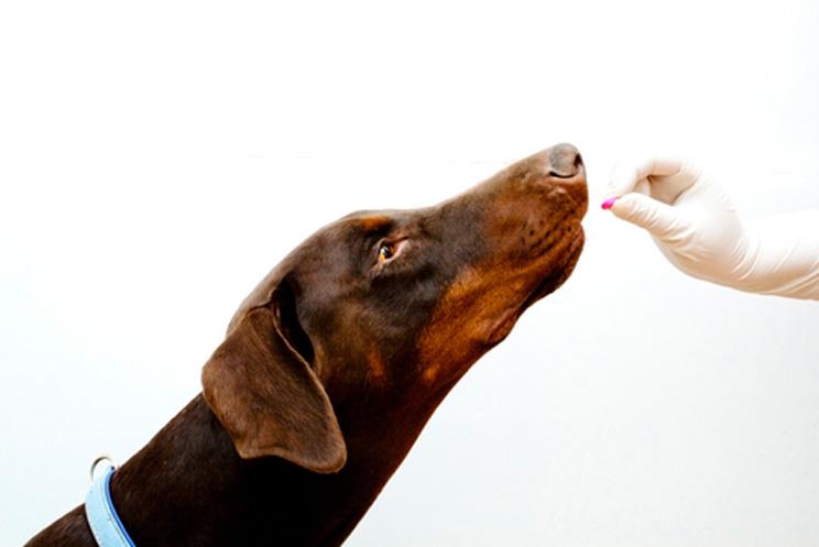 En qué consiste la desparasitación de un perro