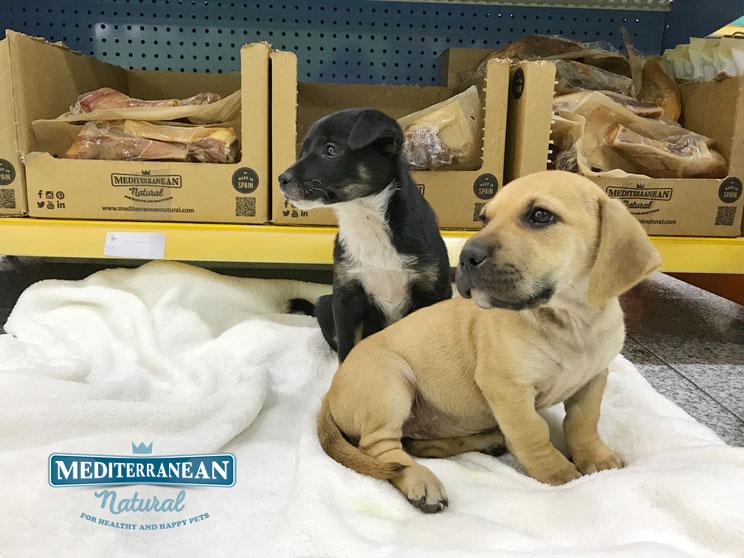 Perros en adopción: Canela y Peludo, amigos y residentes en Alicante