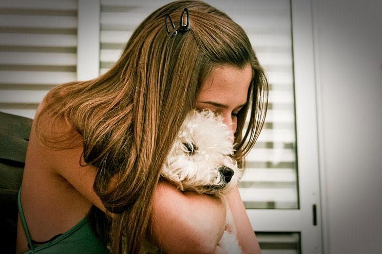 Wizapet: la aplicación para encontrar mascotas perdidas