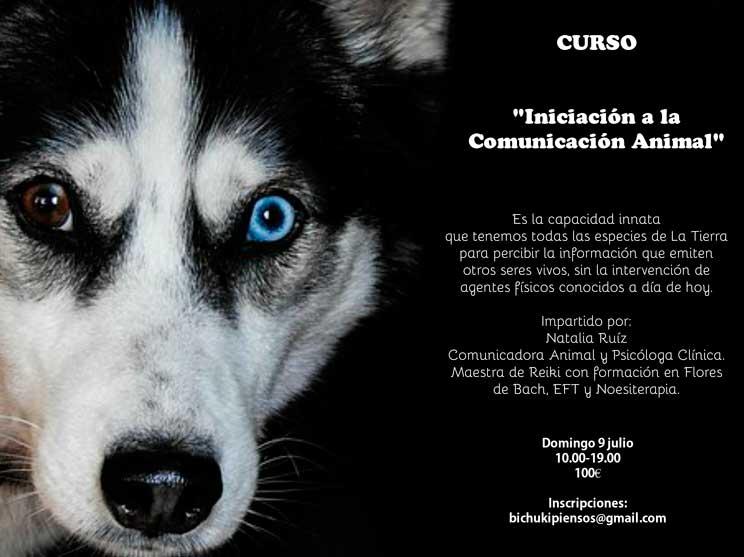 Agenda-Dogfriendly-8-actividades-con-perro-en-julio-que-no-te-puedes-perder-3