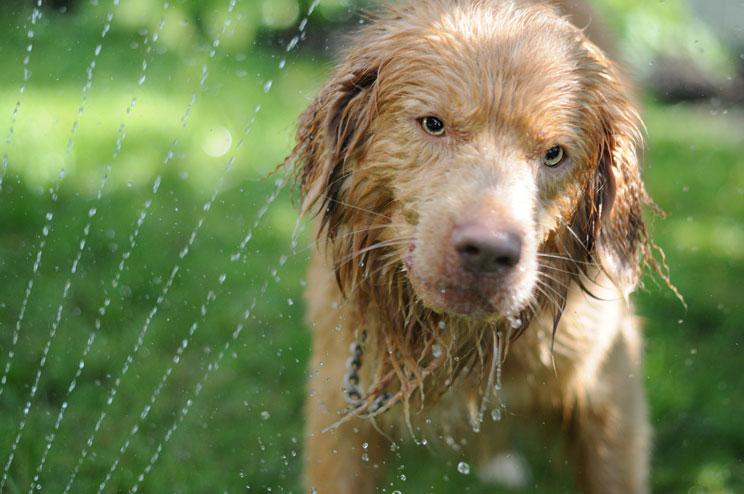 Combatir el calor en verano: 12 consejos para perros