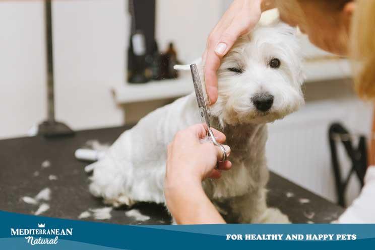 ¿Es aconsejable rapar el pelo a mi perro en verano?