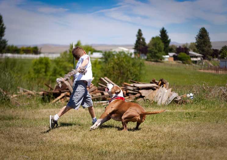 Guía completa de las razas de perros: American Staffordshire Terrier