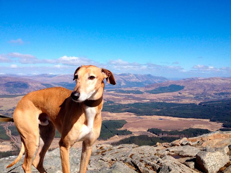 15-cosas-imprescindibles-que-hay-que-llevar-si-viajas-con-perro-3
