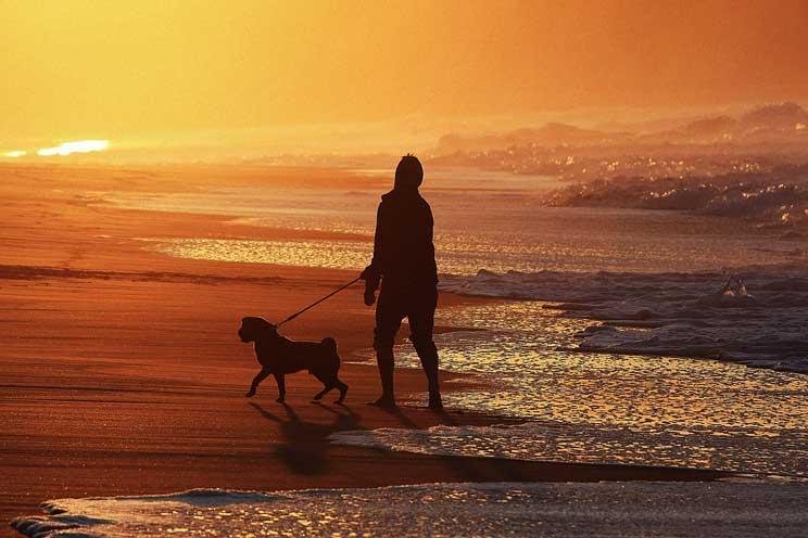 Cómo ayudar a tu perro a volver a la rutina tras las vacaciones