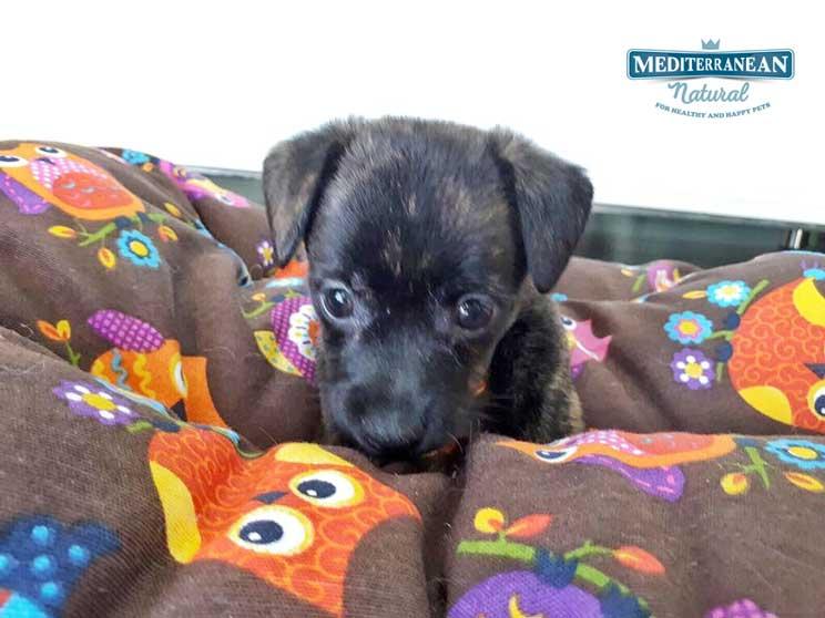Perros-en-adopcion-osito-y-cucurucho-3