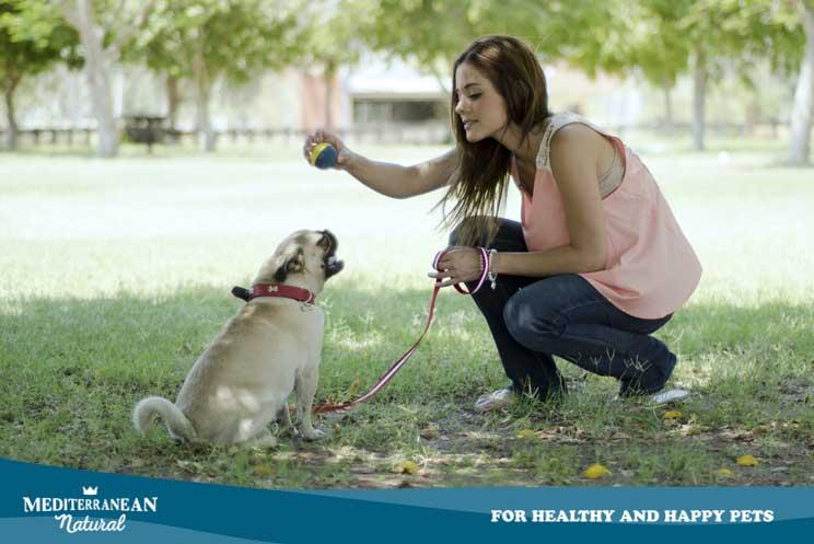 Síndrome postvacacional en perros: ansiedad, tristeza y depresión