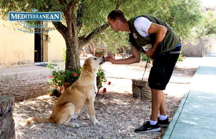 Tutorial de adiestramiento: Cómo enseñar a un perro a sentarse