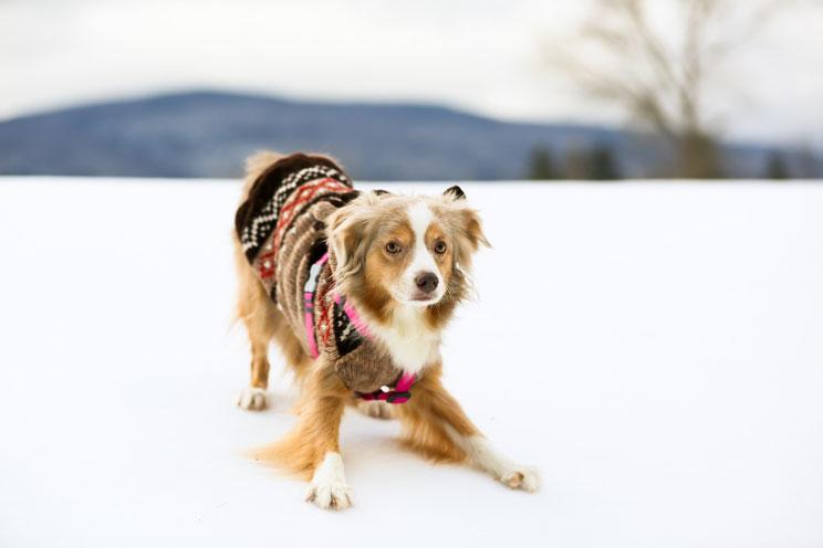 Como-prevenir-el-resfriado-en-perros-4