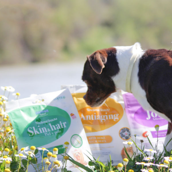 Cuatro Patas Web y Functional Snacks para perros de Mediterranean Natural