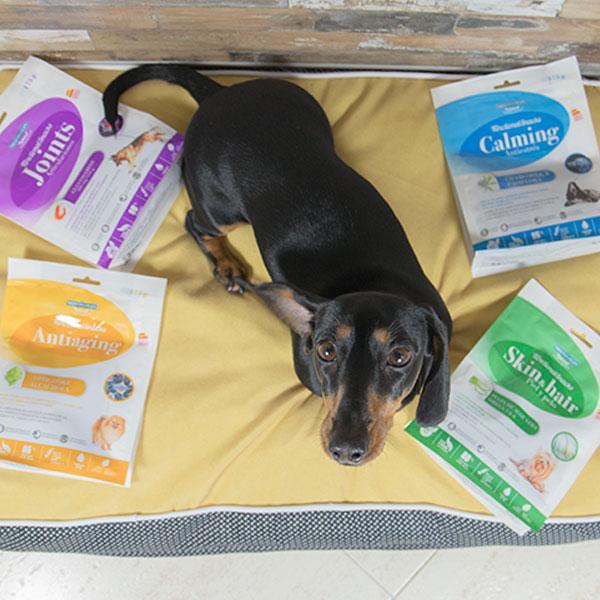 Elma Ladra Blog y Functional Snacks de Mediterranean Natural para perros