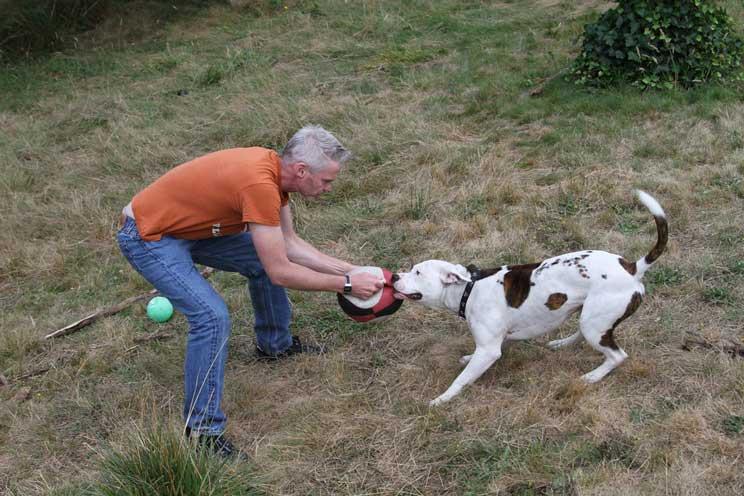 La-importancia-del-juego-en-la-vida-de-un-perro-2