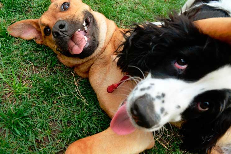 La importancia del juego en la vida de un perro
