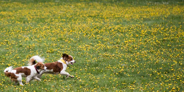 La-importancia-del-juego-en-la-vida-de-un-perro-4