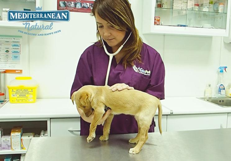 Reconocimiento veterinario postvacacional