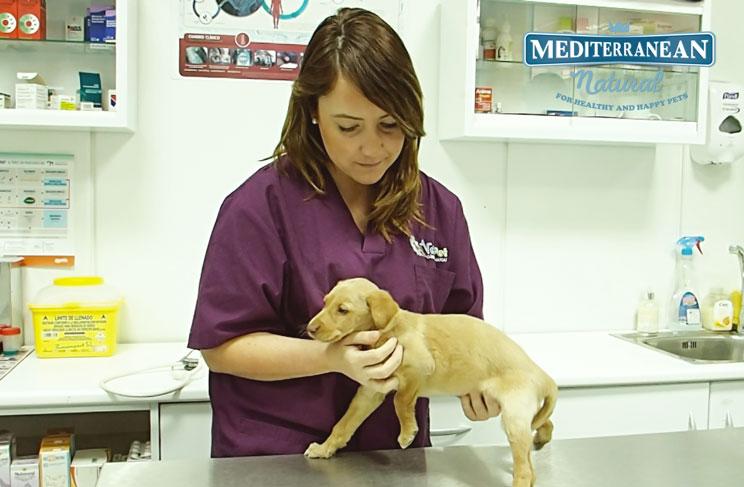 Reconocimiento-veterinario-postvacacional-2