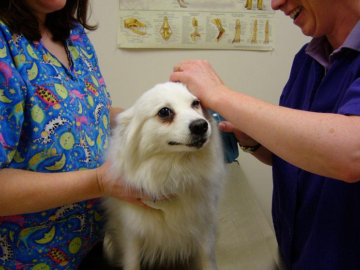 Reconocimiento-veterinario-postvacacional-4