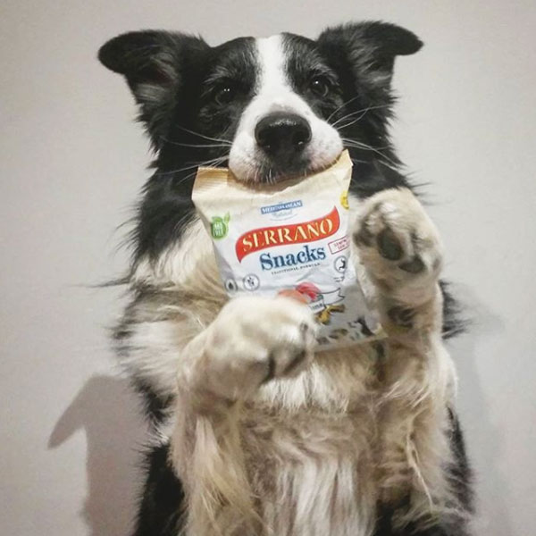 Redes sociales: Hiro border collie y Serrano Snacks