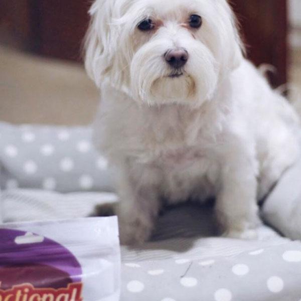 Redes sociales: Con Perros y a lo Loco y Functional Snacks
