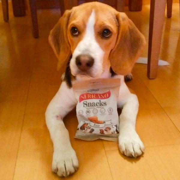 Redes sociales: Curry The Beagle y Serrano Snacks