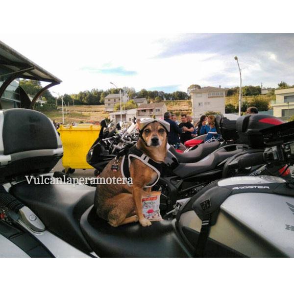 Redes sociales: Vulcan la perra motera y Serrano Snacks
