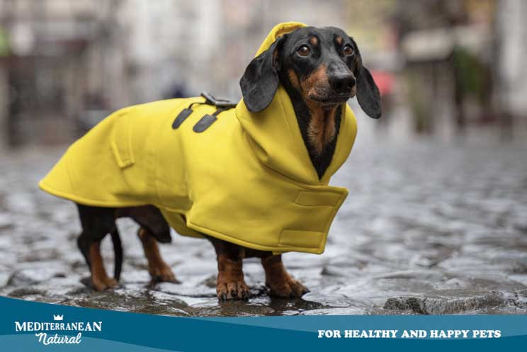¿Debo poner ropa a mi perro? ¿Beneficia o perjudica al animal?