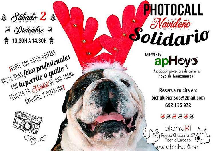 Agenda dogfriendly: actividades con perro en diciembre