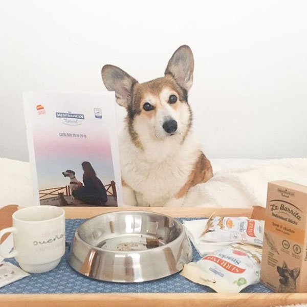 Captain Spok The Corgi y productos Mediterranean Natural para perros