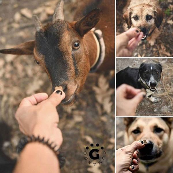 Comando G Galicia y Tapas Gourmet para perros de Mediterranean Natural