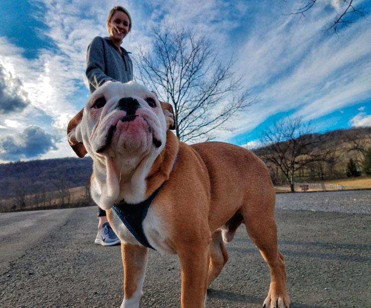 Cómo y cuándo pasear a tu perro