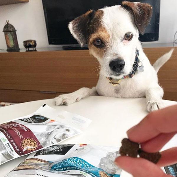 La vida con Pancho y Tapas Gourmet de Mediterranean Natural para perros